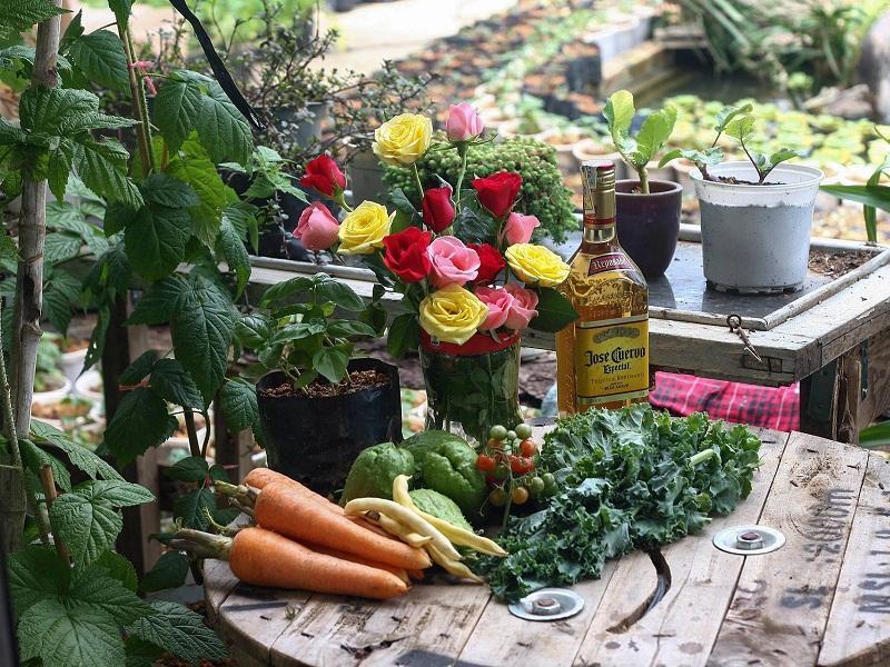 Nông Sản Đà Lạt Vườn Rau