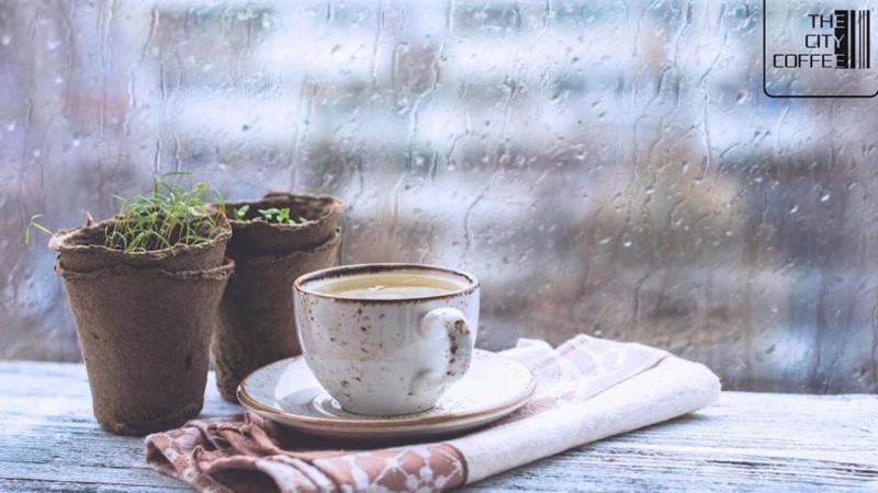 Lạc vào không gian xanh The City Coffee